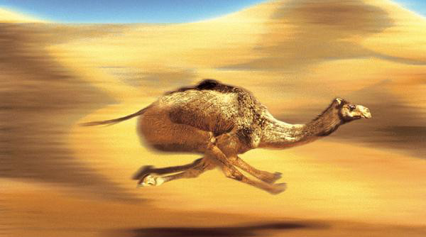 Faster File Consumption With Camel | Reagan's Blog